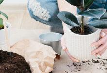 15 Consejos Brillantes y Fáciles para el Cuidado de las Plantas