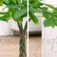 Pachira, pachorra, pachira aquatica, pachira trenzada, planta tronco trenzado, como trenzar la pachira, planta trenzada, pachira planta, pachira acuatica, planta pachira, jade y relax