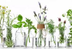 8 Plantas de Interior que Pueden Crecer en el Agua