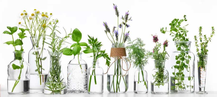 Planta de Interior con agua banner