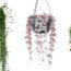 Plantas Crasulas Colgantes