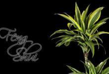 Las Mejores Plantas para Feng Shui