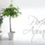 Pachira, pachorra, pachira aquatica, castaña de agua, pachira trenzada, planta tronco trenzado, como trenzar la pachira, planta trenzada, suelo vinilico leroy, pachira planta, pachira acuatica, planta pachira, planta con tallo trenzado, jade y relax