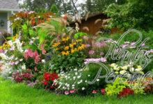 Las 14 Mejores Tipos de Plantas Perennes para Decorar Tu Jardín