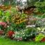 Tipos de Plantas Perennes, plantas para hogar, mejores plantas, flores perennes, plantas perennes mas bellas