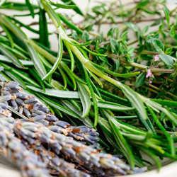 repelente tomillo, planta lavanda repelente, planta repelente de insectos, Plantas Repelentes de Mosquitos