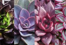 11 Plantas Suculentas Inusuales para su Jardín