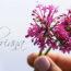 Valeriana para el Estrés, uso de la valeriana, beneficio de la valeriana, infusión valeriana, te de valeriana, raiz de valeriana