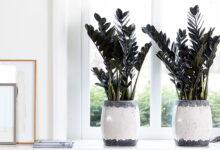 6 productos de jardinería de interior para mantener las plantas exuberantes y sanas