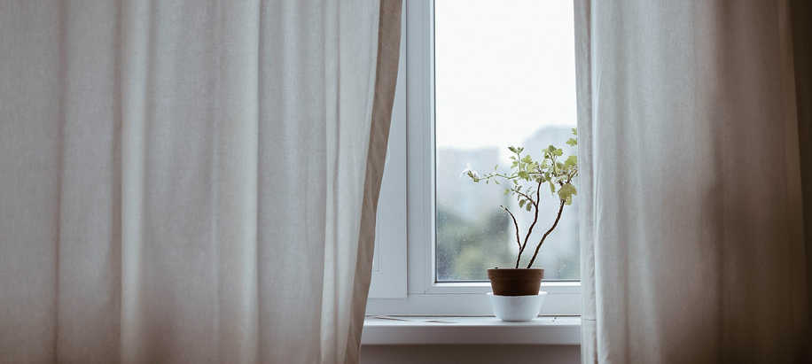 plantas de interior online, planta de interior poca luz
