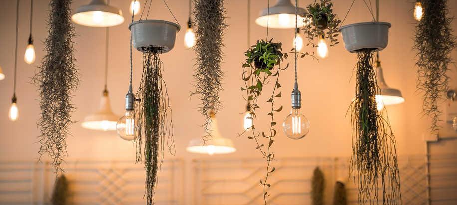 plantas de interior, iluminacion para plantas