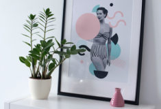 Las 9 Mejores Plantas para tu Oficina o Escritorio