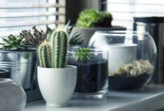Plantas de Interior | Una Guía para el Cuidado de Tus Plantas