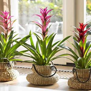 Plantas de Interior Bromelias