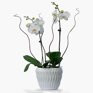 Plantas de Interior Orquideas