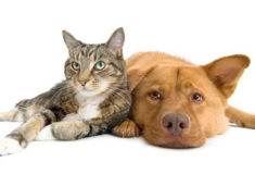 19 Plantas de Interior Seguras para Perros y Gatos