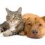 Plantas de Interior Seguras para Perros y Gatos