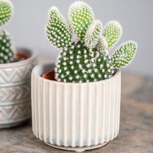 Cactus, Plantas de Interior Zodíaco,
