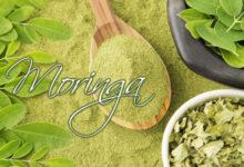 Moringa �rbol de la Vida | Propiedades y Beneficios de la Planta Medicinal
