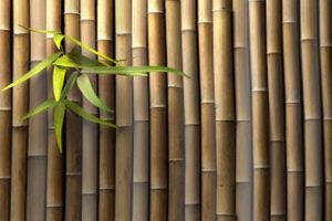 Plantas de bambu en baños 1