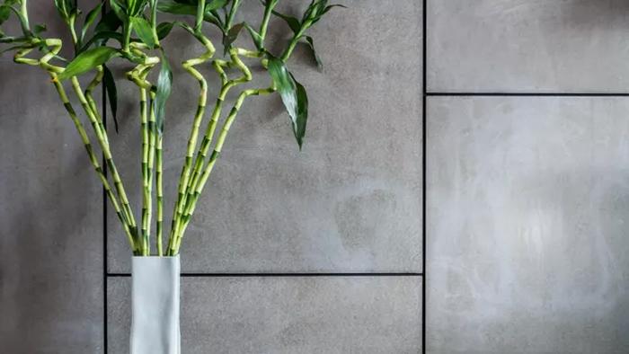 Plantas de bambu en baños 4