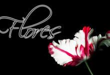 Las 7 Flores más Caras del Mundo