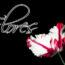 Azafrán Crocus, Flores más Caras del Mundo, Tulipanes, Oro de Orquídea Kinabalu, Orquídeas, lirios, flores de luna, Orquídea Nongke de Shenzhen, Juliet Rose, Flor de Kadupul