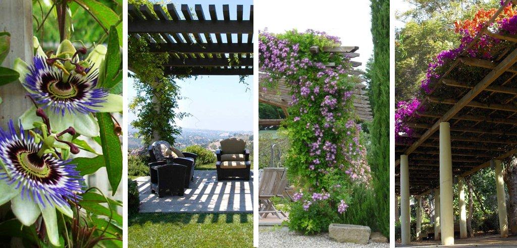 plantas para pergolas, las mejores plantas trepadoras para pergolas, plantas para cubrir pergolas