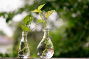 Propagación de las plantas de interior