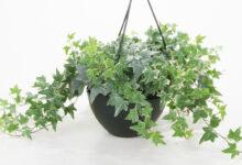 Cómo Elegir Plantas Sanas?