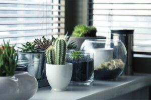 mejores cactus para interior