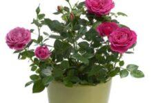 Cómo Atraer el Amor, la Alegría y la Prosperidad con estas Plantas Mágicas de Interior